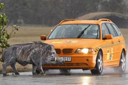 Accidentes con animales: cómo actuar para evitarlos o mitigarlos - SoyMotor.com