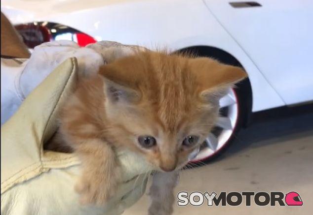Gato Tesla - SoyMotor.com