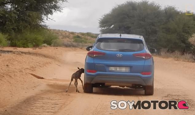 Hyundai Tucson Ñu - SoyMotor