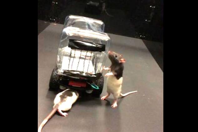 ROV, el vehículo conducido por ratas - SoyMotor.com