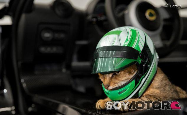 ¿Un casco para tu gato? Ahora es posible con Lotus Cars - SoyMotor.com