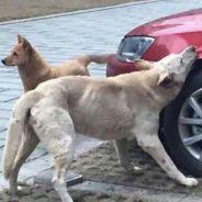 Los perros parece que han cogido el gusto a mordisquear lo pasos de rueda - SoyMotor