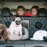Nissan X-trail 4dogs: ¡a tu perro le encantará! - SoyMotor.com