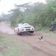 Un perro salva la vida al saltarle por encima el coche de rally -SoyMotor