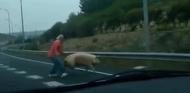 Un conductor trata de capturar al cerdo - SoyMotor.com