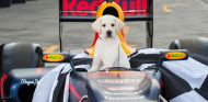 Guide Dogs Australia, entidad benéfica del GP de Australia 2017 - SoyMotor