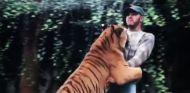 Hamilton, sorprendido cuando el tigre se abalanza sobre él - LaF1