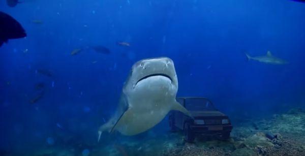 tiburon-soymotor_0.jpg