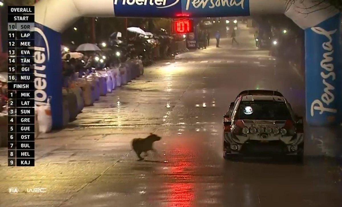 perro-argentina-2019-soymotor.jpg