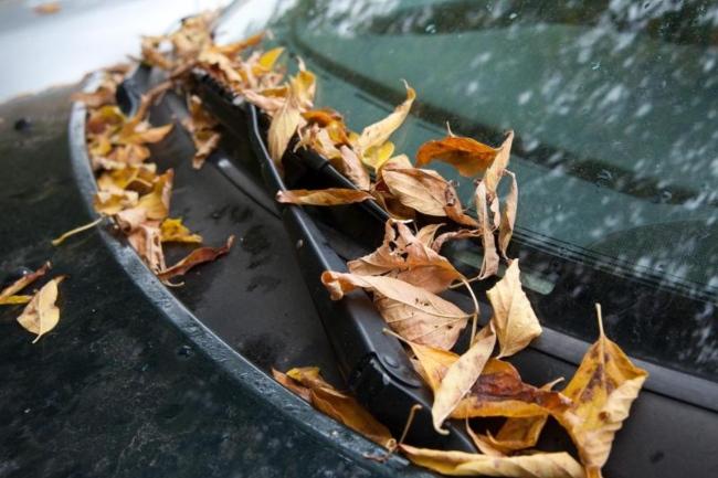hojas-capo-parabrisas.jpg